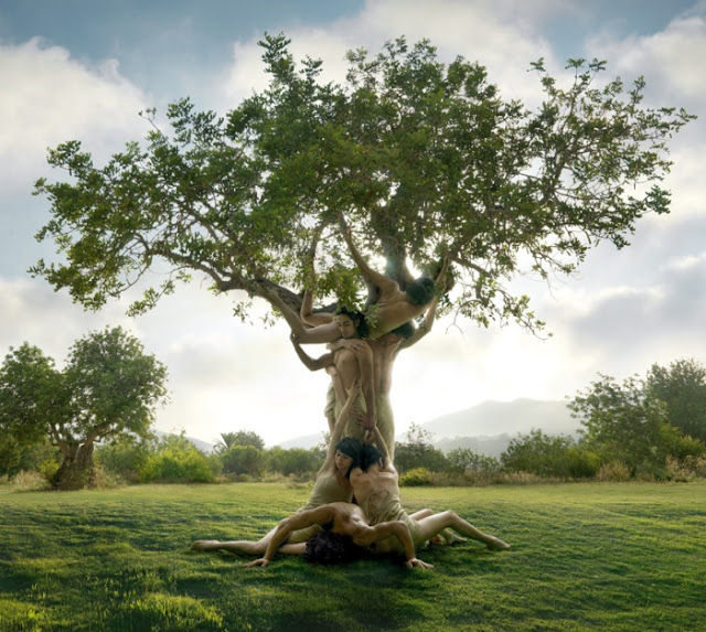 la Femme & l'Homme fusionnés sont l'Arbre de la Connaissance du jardin d'Eden