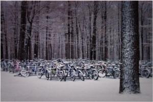 Hibernation de vélos.